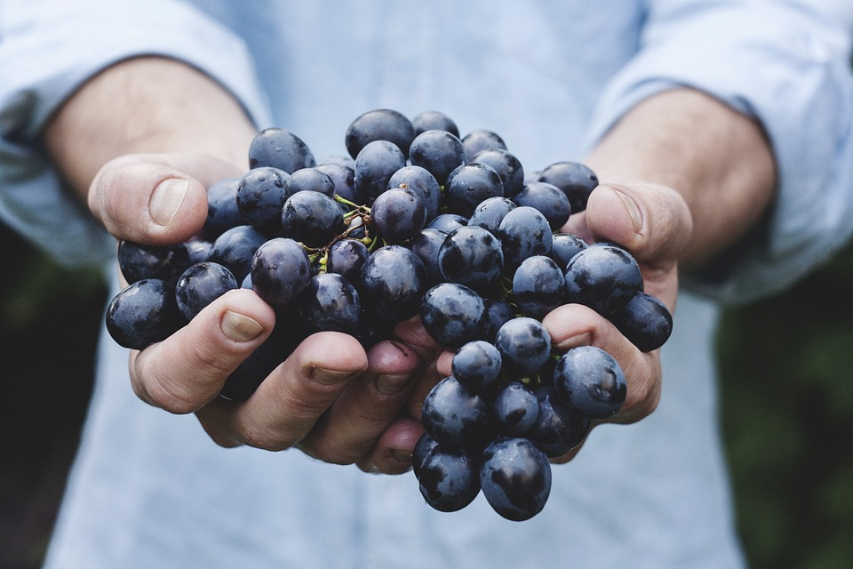 Things You Most Likely Didn't Know About Superfoods-Berry